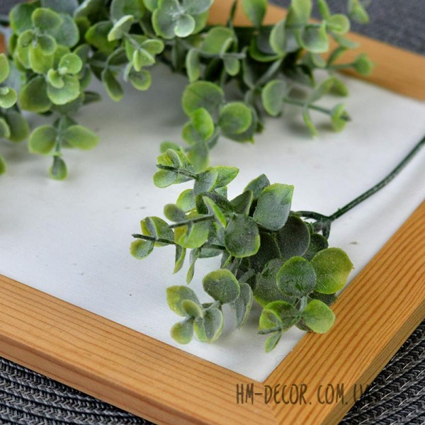 Эвкалипт зеленый с напылением 20 см