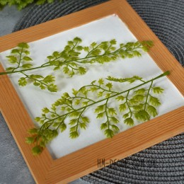 Адиатум зеленый веточка 20 см 1 шт